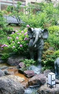 あわら温泉【ぐらばぁ亭】の中庭に、きれいな紫陽花が咲きました!